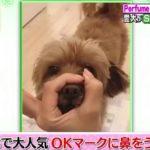 【櫻井・有吉THE夜会】Perfumeあ~ちゃんの「ダメ!」が怖い。SNSで人気,愛犬の一芸習得なるか?