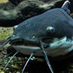 鈴木カリブお魚王子が紹介するおいしい深海魚とは?【マツコの知らない世界】